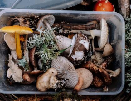 Saisons des cèpes - champignons Médoc Atlantique
