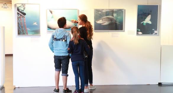 Expo Requin Soulac - © Médoc Atlantique (4)