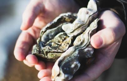Huîtres Spécialités culinaires médoc