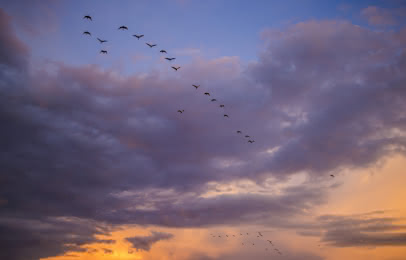 Oiseaux migrateurs grues hourtin