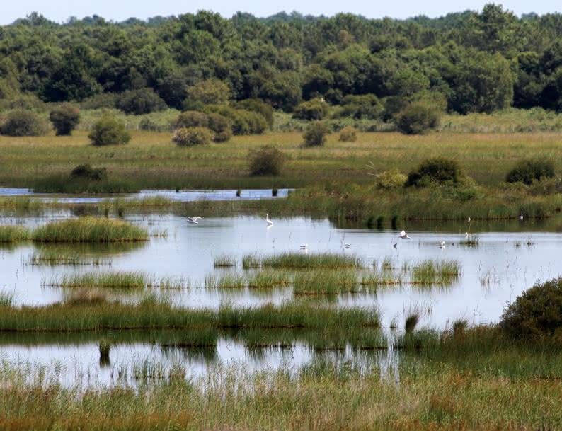 Reserve naturelle de l'étang de Cousseau - © Djé - 1 moment 1 image (2)
