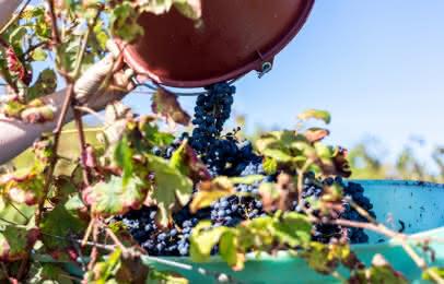 Route des vins Médoc