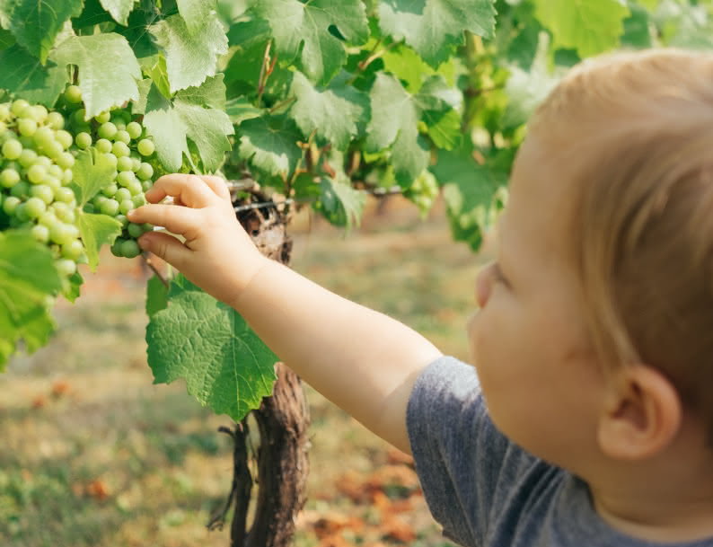 Enfant vigne