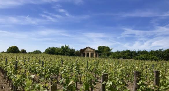 vigne Saint-Emilion