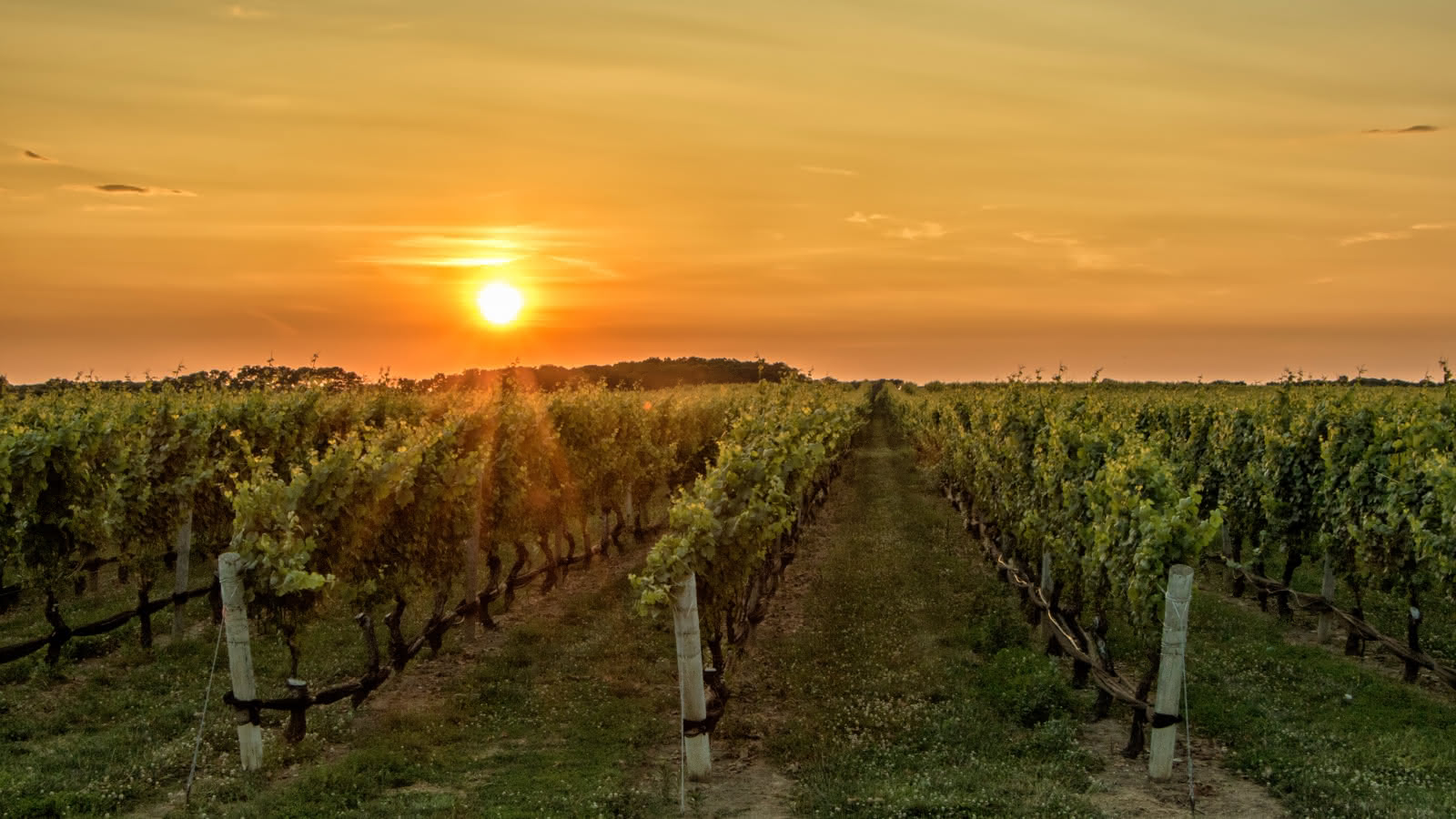 Vignes - Doug-kelley-unsplash
