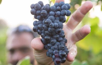Déguster les vins du médoc