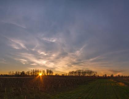 Vignes, coucher de soleil
