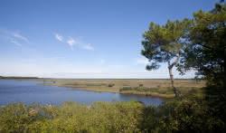 Vélodyssée - Hourtin au Bassin - Etang de Cousseau