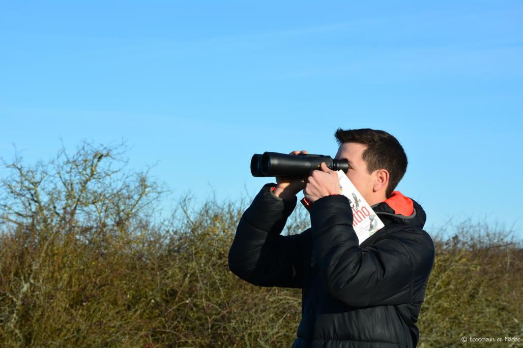 Observation_Oiseaux