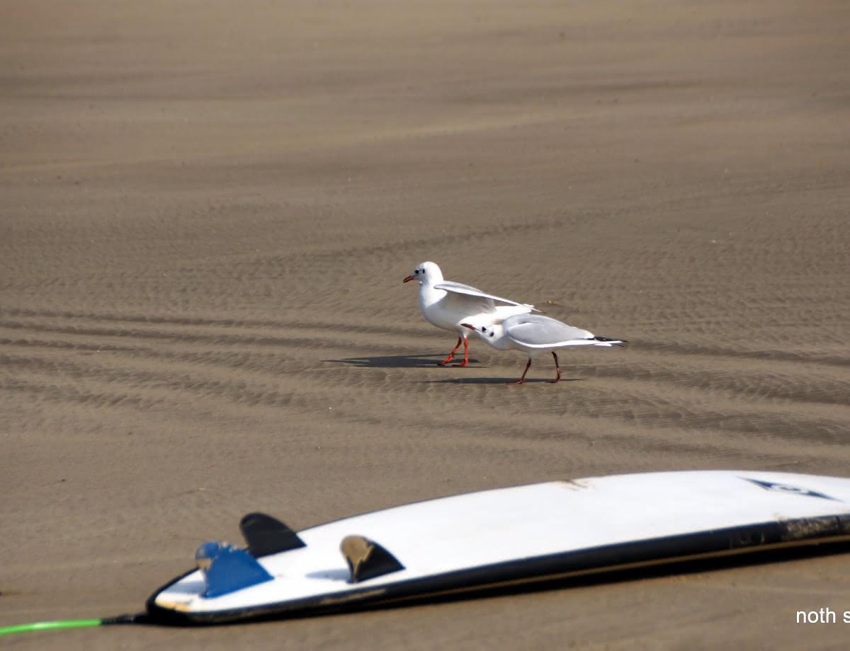 Le Gurp Surf's Cool11