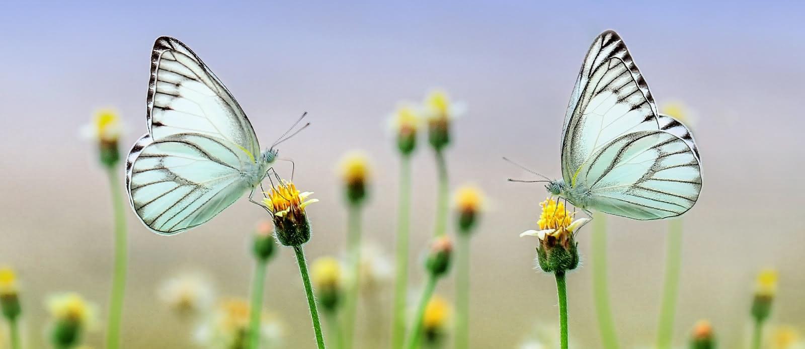 butterfly-1127666-1920