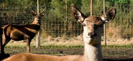 Animalia-Parc---La-Ferme2