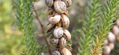 escargots-plage