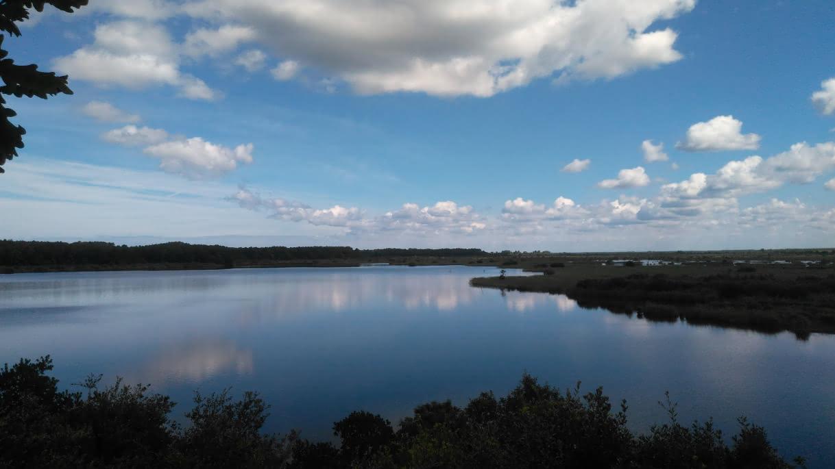 Reserve-naturelle-de-Cousseau-----Mathilde-Sepanso--11--2-82b0c793ada94d1181f1b753afa40ac7