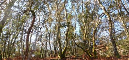 Sentier des chênes