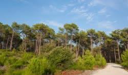 Forêt Hourtn