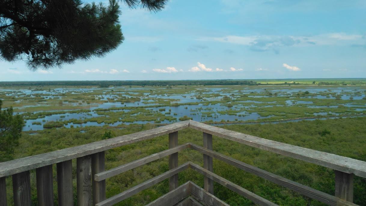 Reserve-naturelle-de-Cousseau-----Mathilde-Sepanso--8--2-7aa77d183e9343aa8e64858ea6cd1ae7