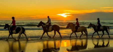 Atlantique-club-Equestre-Ferme-Pedagogique--3