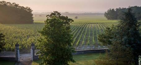 Vignes Chateau Malescasse - (c) Christophe Goussard
