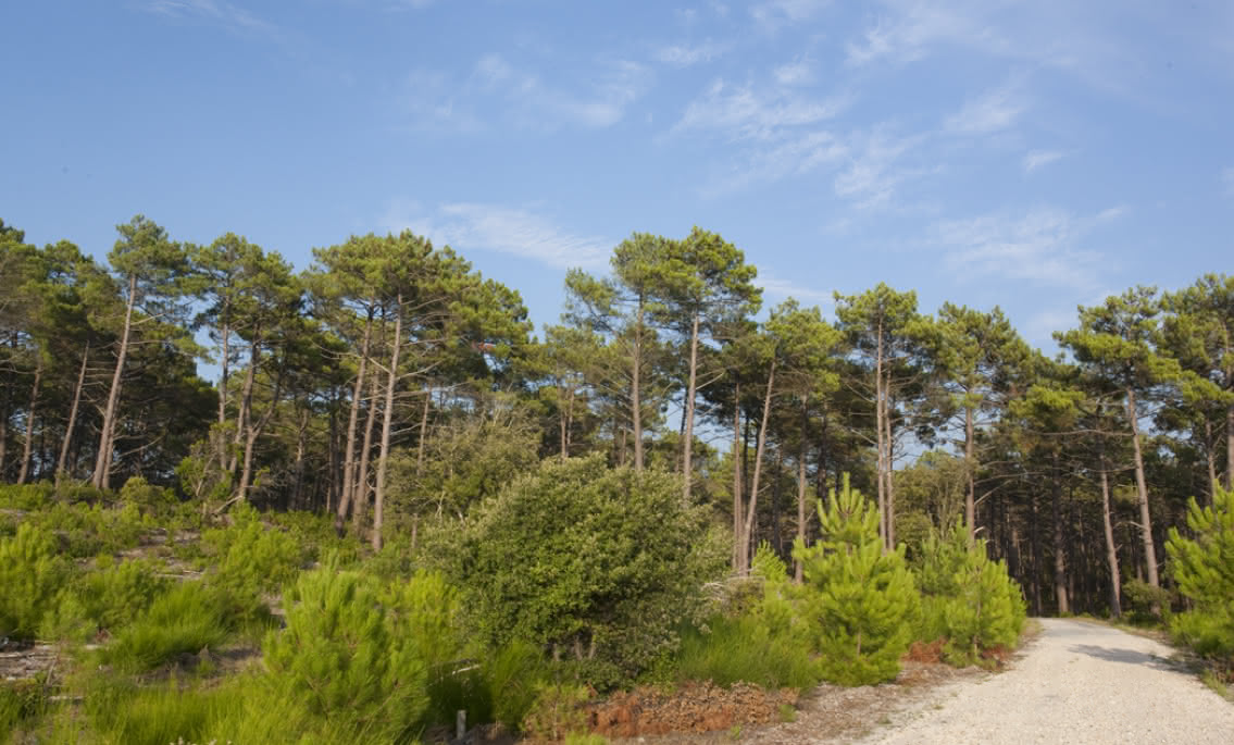 MEDOC OCEAN FLORES FORETS 05